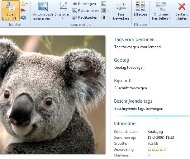 141215_koala