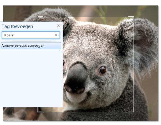 141215_Koala2