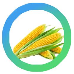 milieucentraal-groente-fruitkalender(1)